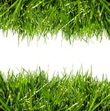 Green grass border on white Stock Image