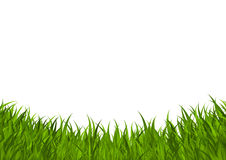 Green grass border Royalty Free Stock Image