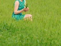 Green Grass Bouquet Royalty Free Stock Photos