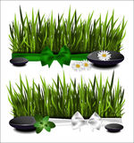Green grass with a bow Royalty Free Stock Images