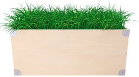 Green grass in box Stock Image