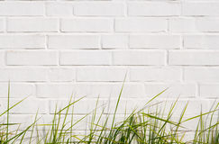 Green grass and  brick wall. Green grass and white brick wall Royalty Free Stock Photo