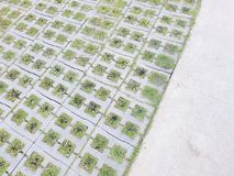 Green grass on bricks and concrete royalty free stock photo