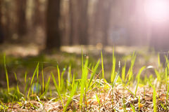 Green Grass With Bright Sunlight Royalty Free Stock Photos