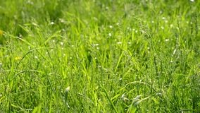 Green grass on a bright sunny day. HD 1080 stock video footage