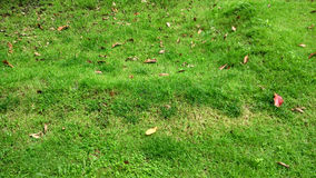 Green grass and brown leaves Royalty Free Stock Images