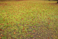 Green grass and brown leaves Royalty Free Stock Photos