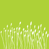 Green Grass Buds Stock Images