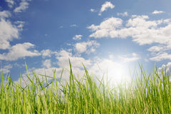 Green grass and bule sky Royalty Free Stock Photo