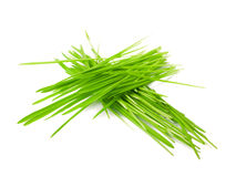 Green grass in bundles isolated on white Royalty Free Stock Photos