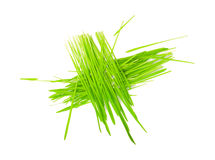 Green grass in bundles isolated on white Stock Photography