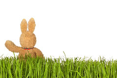 Green Grass and Bunny Royalty Free Stock Photo
