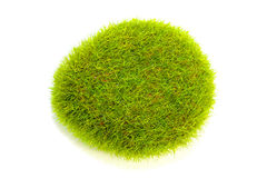 Green grass bush Stock Images