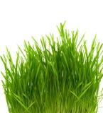 Green Grass Bush Stock Images
