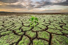 Green grass bush grows in the middle of the cracked earth from a drought, summer day stock photo