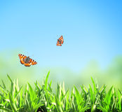 Green grass and butterflies Royalty Free Stock Photos