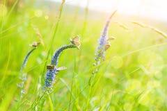 Green grass and butterflies in a field Stock Photos