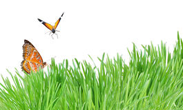 Green grass and butterflies isolated on the white Stock Photo