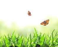 Green grass and butterflies Royalty Free Stock Photo