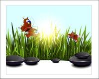 Green grass and butterflies Stock Photo