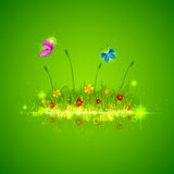 Green Grass with Butterfly Royalty Free Stock Photography