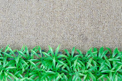 Grasswith Carpet. Green grass with carpet texure Stock Photography