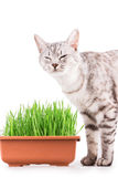 Green grass cat Stock Photography
