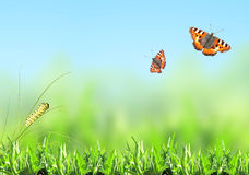 Green grass, caterpillar and butterfly Stock Image