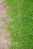 Green grass and Cement floor background, Texture, two tone Royalty Free Stock Image