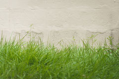 Green grass and cement wall background Royalty Free Stock Photos