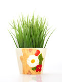 Green grass in a ceramic flower pot  on white background Stock Images