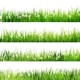 Green grass and chamomiles. EPS 10 Stock Photo