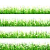 Green grass and chamomiles in the nature. EPS 10 Royalty Free Stock Images