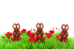 Green grass with chocolate easter hares Stock Photography