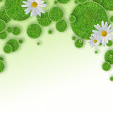 Green grass circles background Stock Photo