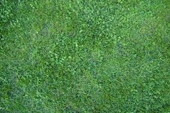 Green grass in city park Stock Photography