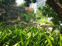 Green grass in the city park royalty free stock image