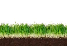 Green grass with clay Stock Image