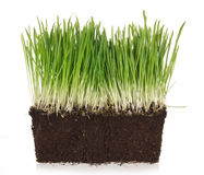 Green grass with clay Stock Photography