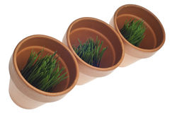 Green Grass in Clay Pots Stock Photo