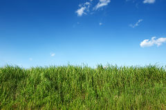 Green grass in clear blue sky Royalty Free Stock Photos