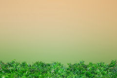 Green grass on clear brow and green Stock Image