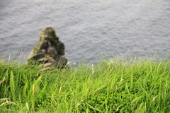 Green grass on the Cliffs of Moher, Ireland Stock Photography
