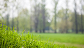 Green grass close up Royalty Free Stock Photos