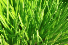Green grass close-up. For a beautiful background Stock Image