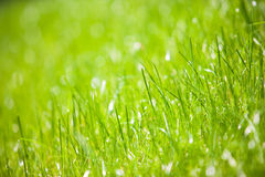 Green grass close-up Stock Photography