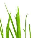 Green grass close-up. Close-up green grass isolated over white stock photography