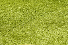 Green grass close-up background Royalty Free Stock Image