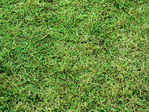 Green grass in close up. Background Stock Image