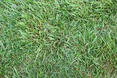 Green Grass. Close up of grass blades Stock Photo